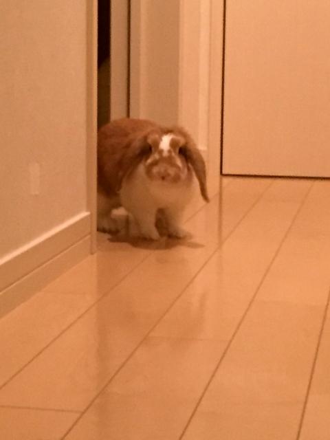 rabbit-on-floor